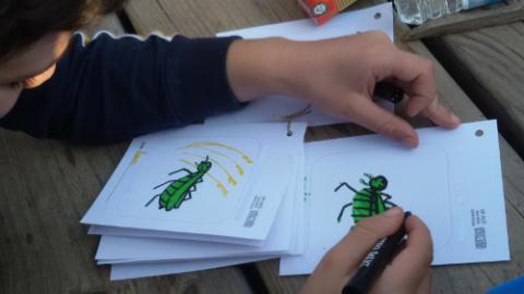 Dibuixant un insecte a la llibreta de camp